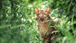 Cat in the Grass HD Wallpaper