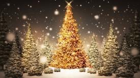Christmas Trees HD Wallpaper