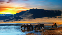 Photo of Horses in Lake at Sunset HD Wallpaper