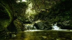 Photo of Waterfall in Woods HD Wallpaper