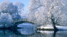 Winter in the Park HD Wallpaper