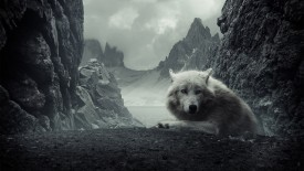 Wolf at Rest HD Wallpaper