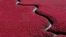 Red Beach Panjin China HD Wallpaper
