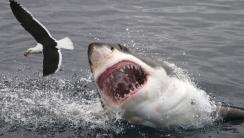 White Shark Attacking A Bird HD Wallpaper